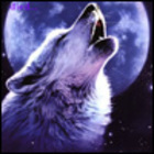 Px140x140 wolf moon