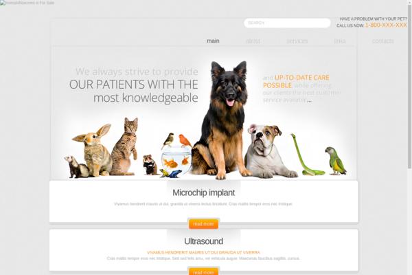 animalsnow.com - pets, animals, dogs, cats, birds, pet cats
