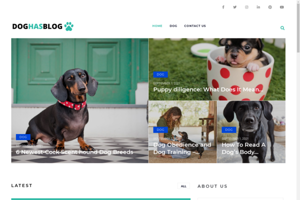 doghasblog.com - Dog Blog with Unique Content 12,000 + Words. Get Organic Traffic.