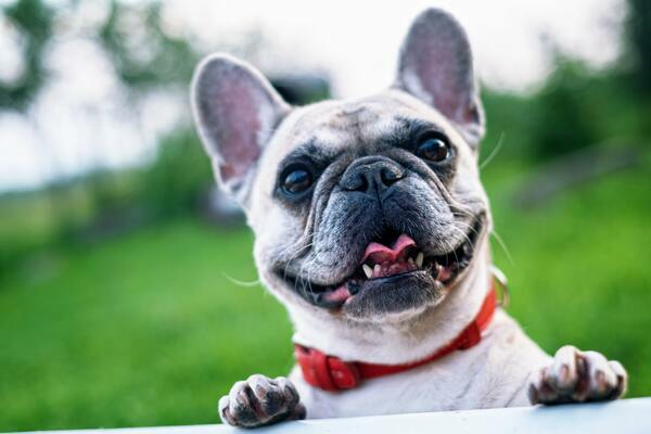 PetsHub 24 - PetsHubre24.com earns $1,180 per month | Beginner Friendly | Automated | High Profit Niche | Drop - shipping website with 1600+ goods sold globally.